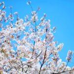 今年唯一のお花見。中目黒は桜もすごいけど人もスゴイ٩( 'ω' )و (by Instagram)